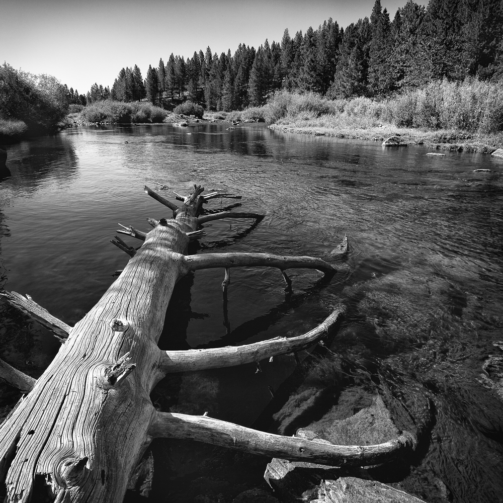 Fallen Timber, Little Truckee River, Sierra County, California