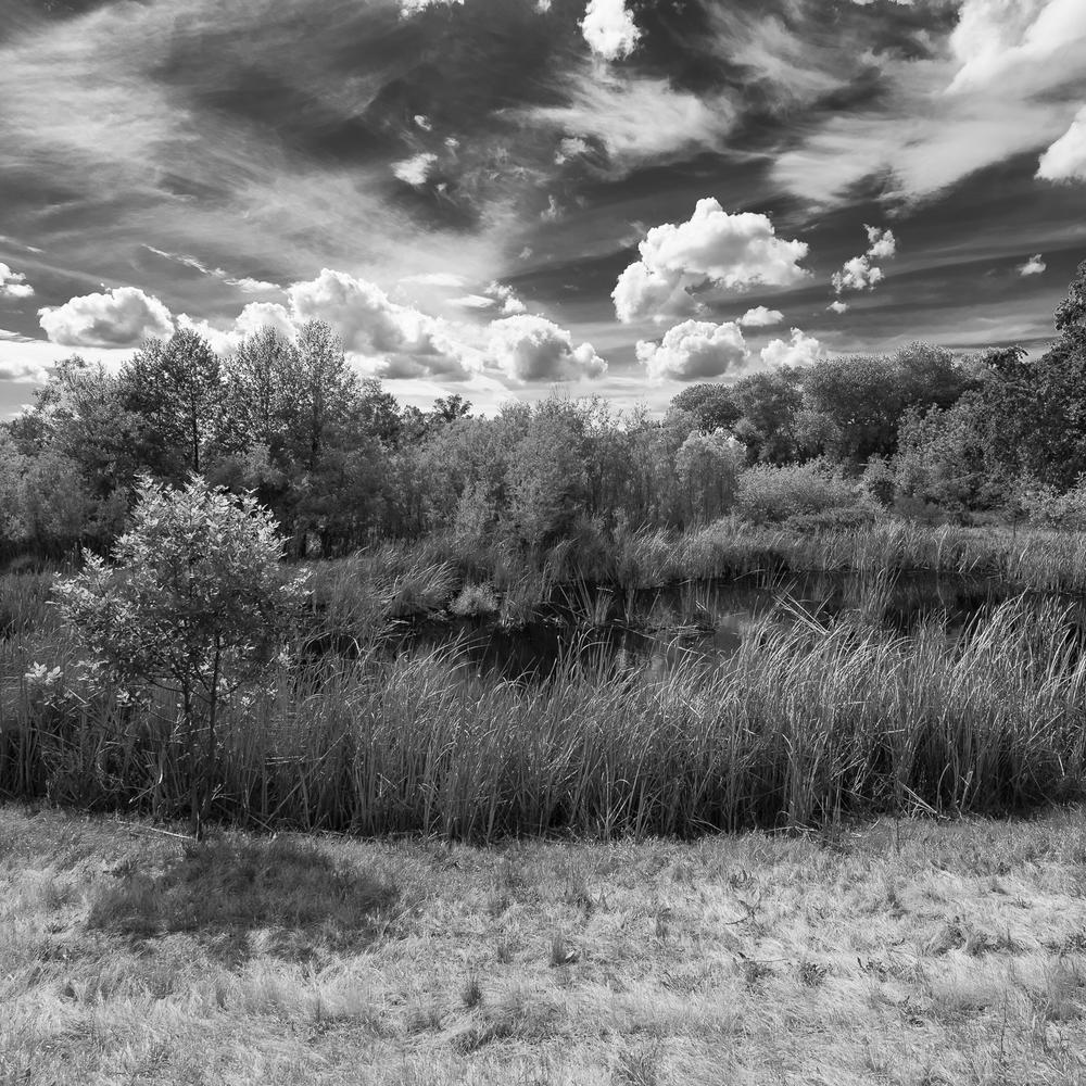 Ferrari Ranch Wetlands, Study 2