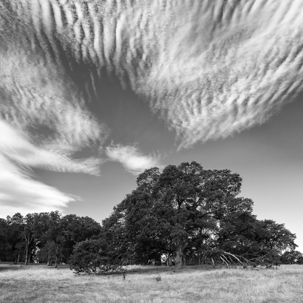 Altocumulus Over Oak Copse