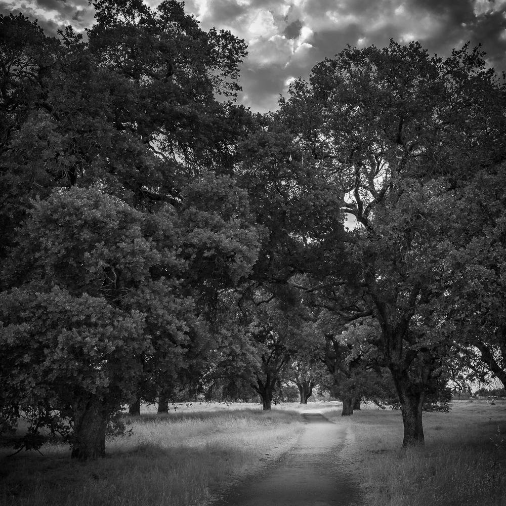 Path Through Oak Woodland, Study 2