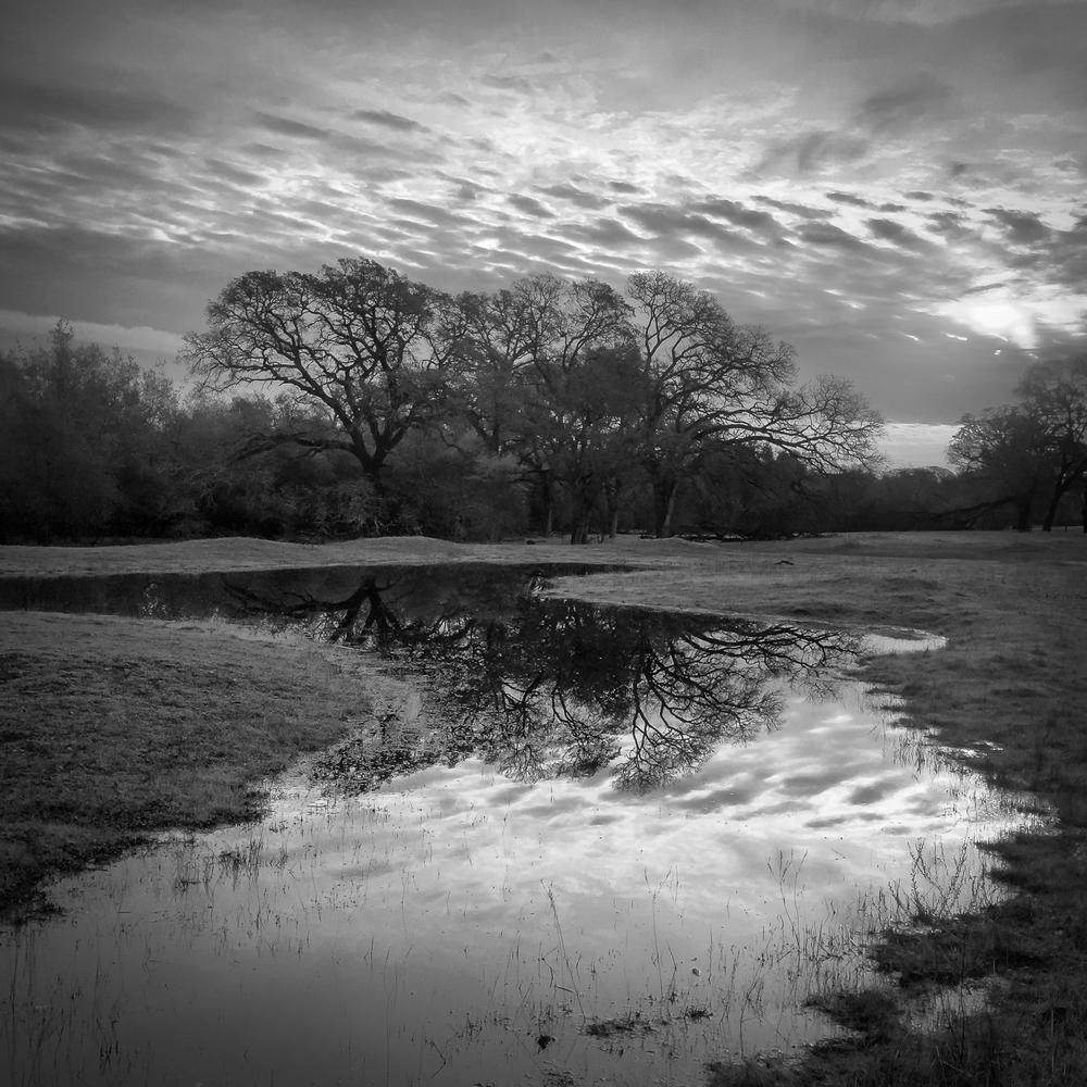 Oak Copse and Ephemeral Wetland