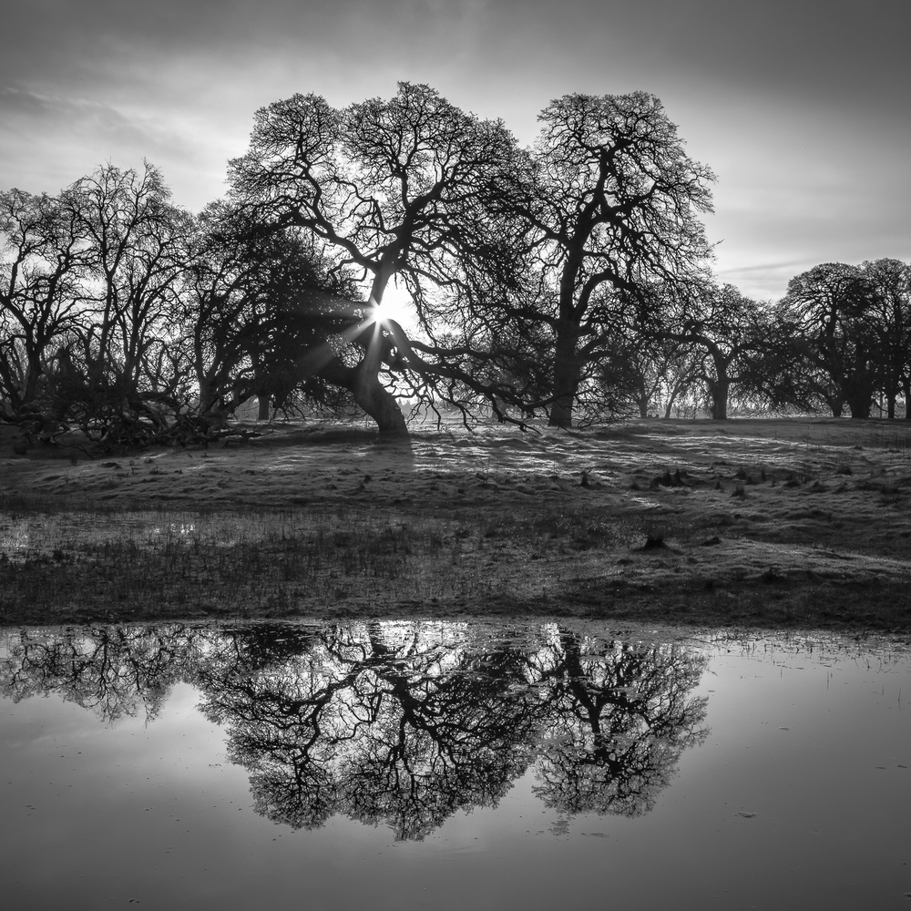 Ephemeral Wetland and Oaks