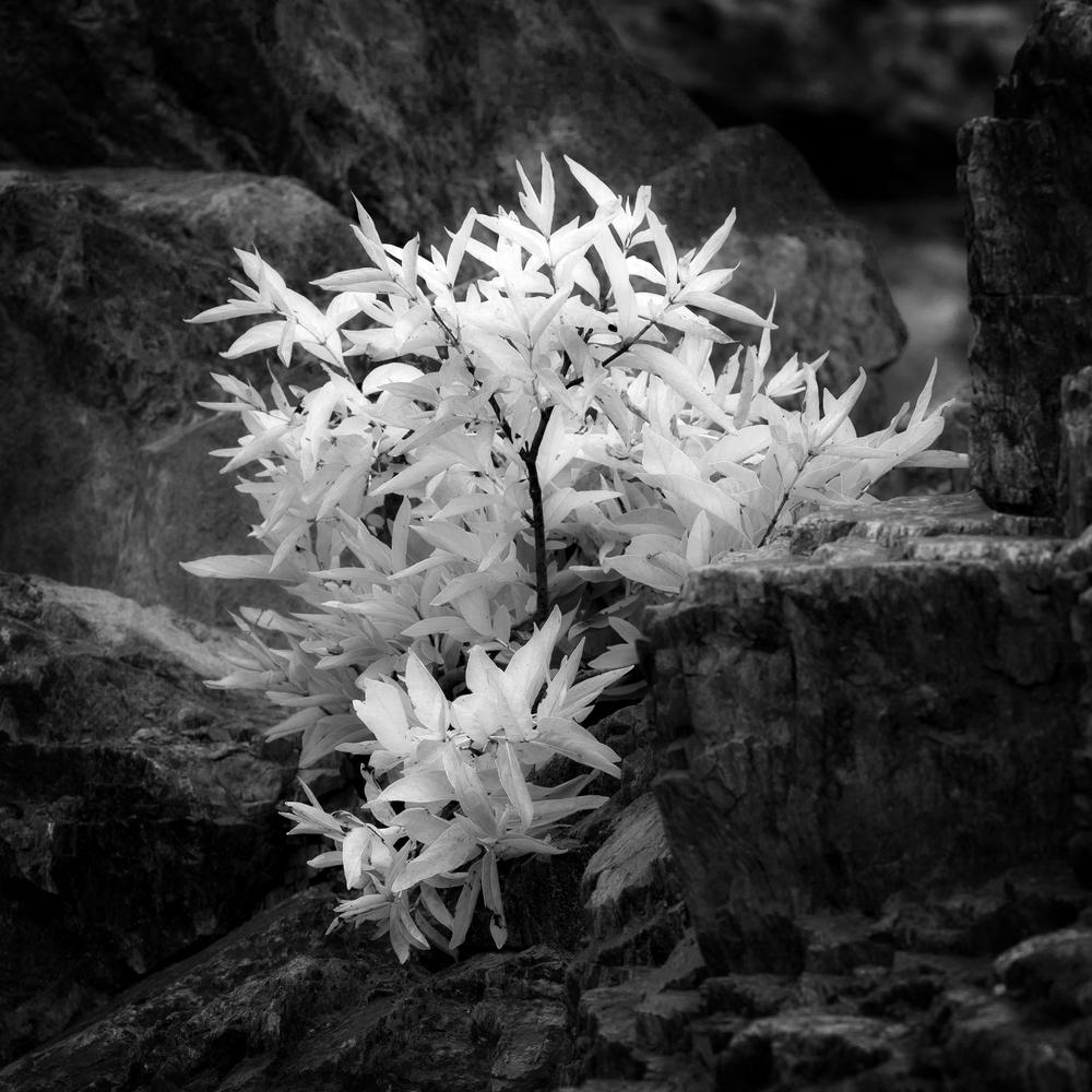Plant Among Rocks