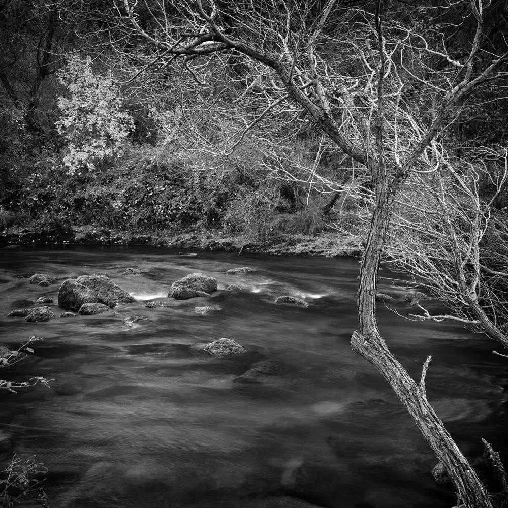 Upper Putah Creek, Study 2