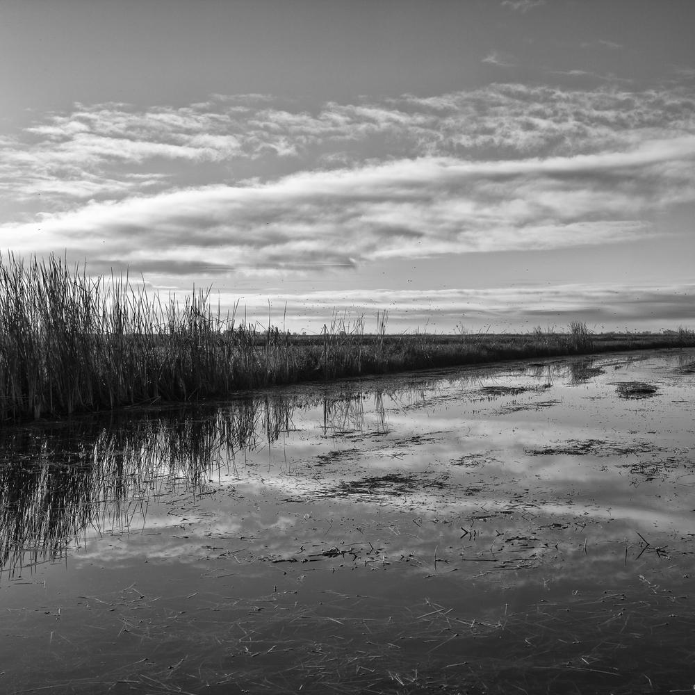 Wetland, Study 3