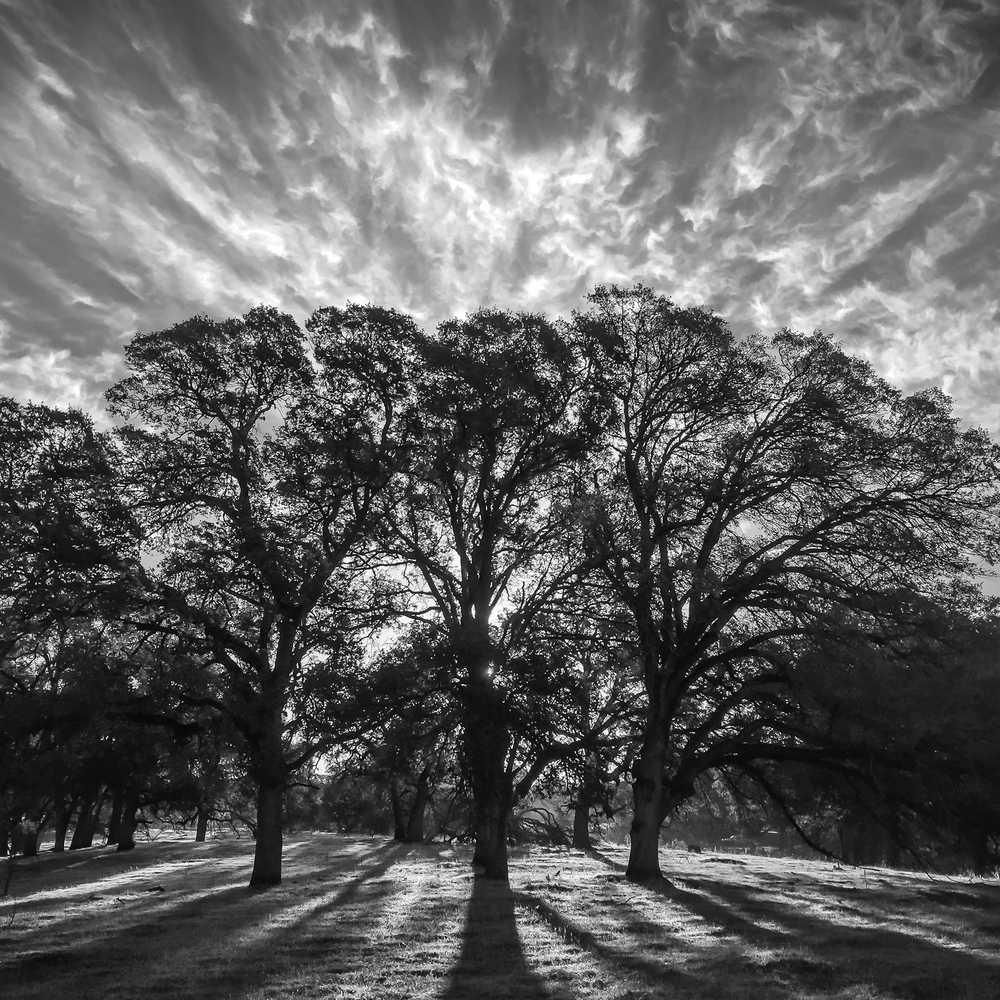 Sunrise_Over_Oak_Copse.jpg