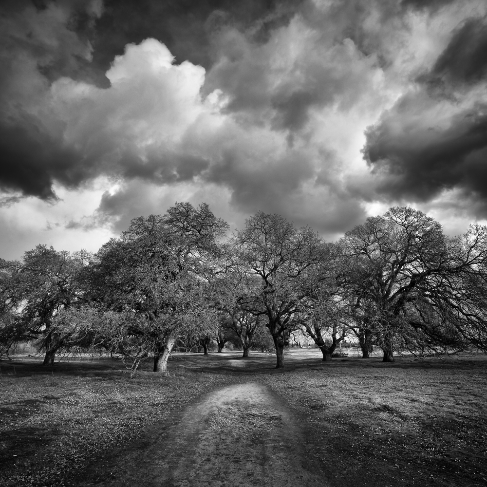 Storm Clouds over Oak Copse