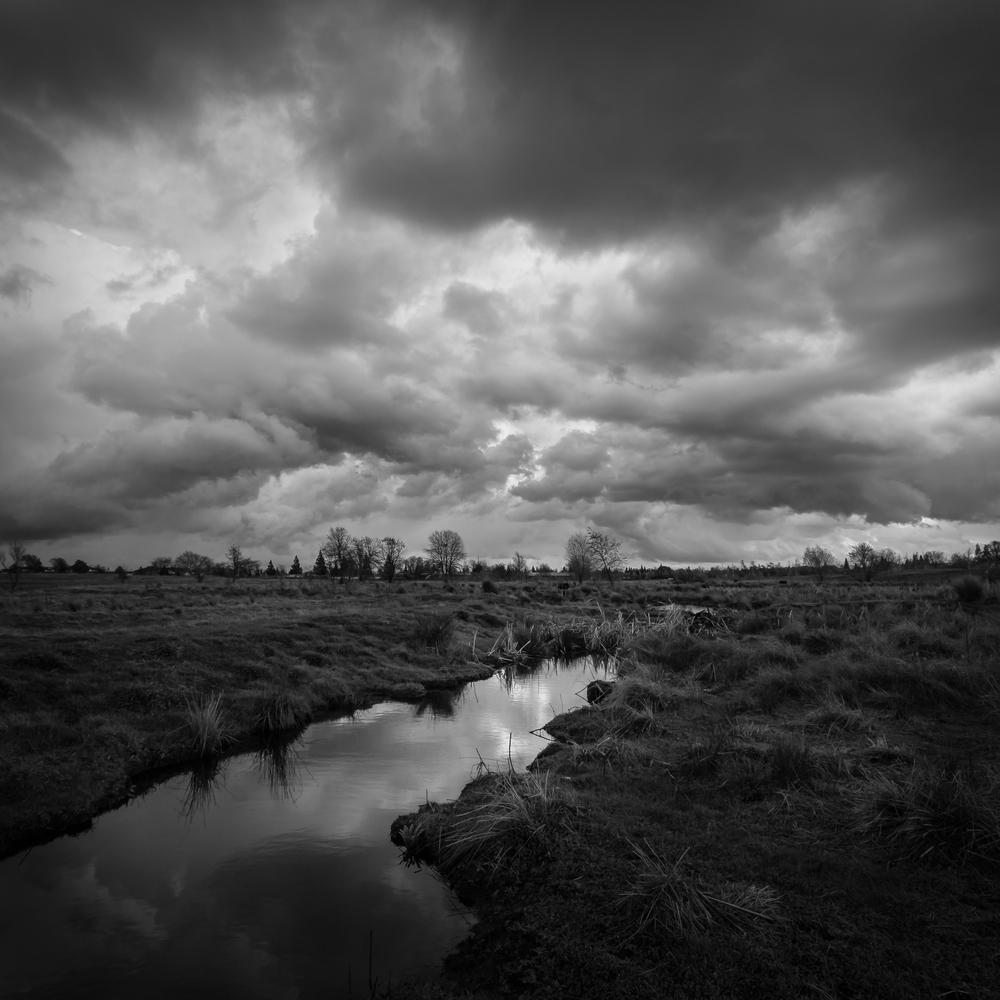 Mahany Wetlands, Study 3