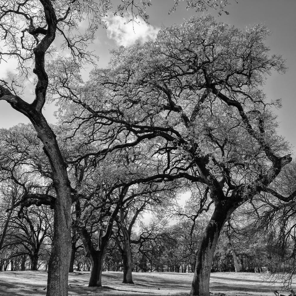 Oak Forest III