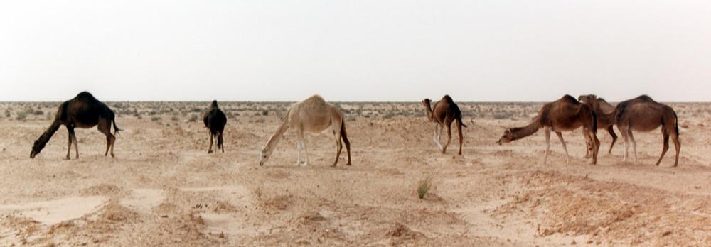 near Douz, Tunisia