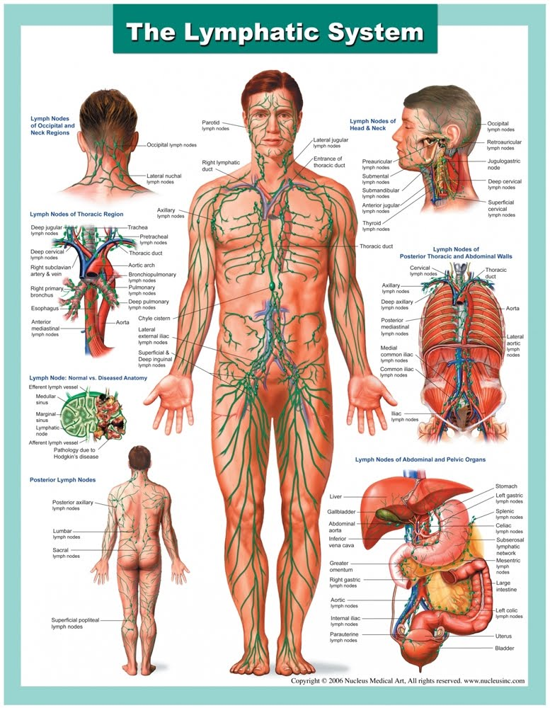 Lymphatic System Q & A — Vibrant Health & Wellness