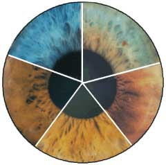 Iridology_Spectrum_Color_Wheel.jpg