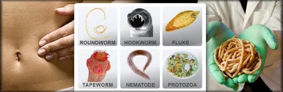 Vibrant_Wellness_Parasites