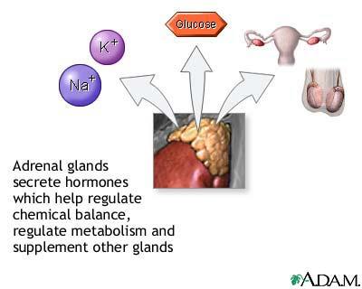Vibrant_Wellness_Adrenal_Hormone_Testing