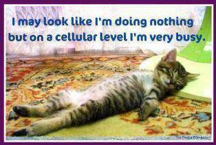cat_cellular_detox.jpg