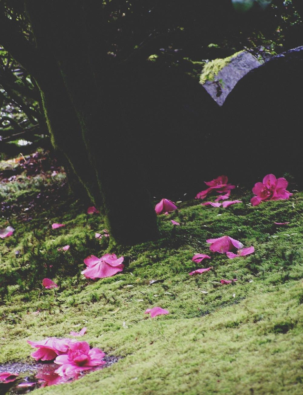 Pink Petals Have Fallen1.jpg