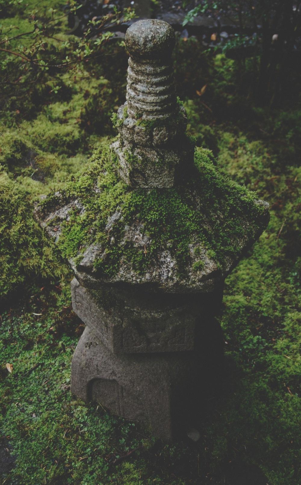 Moss On Stone1.jpg