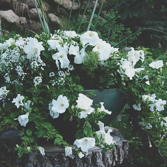 The White Planter
