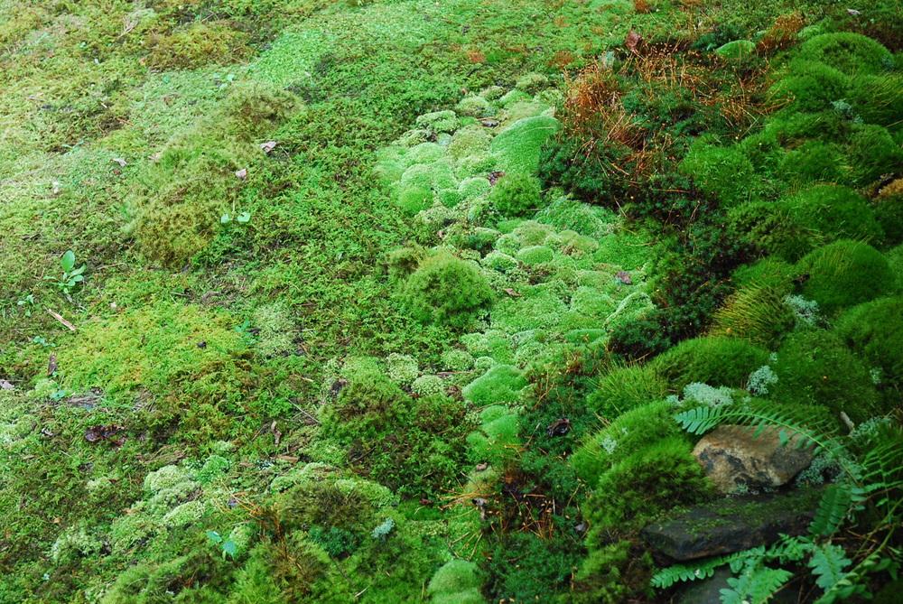 Moss-Innovative-Wave-Leslie.jpg