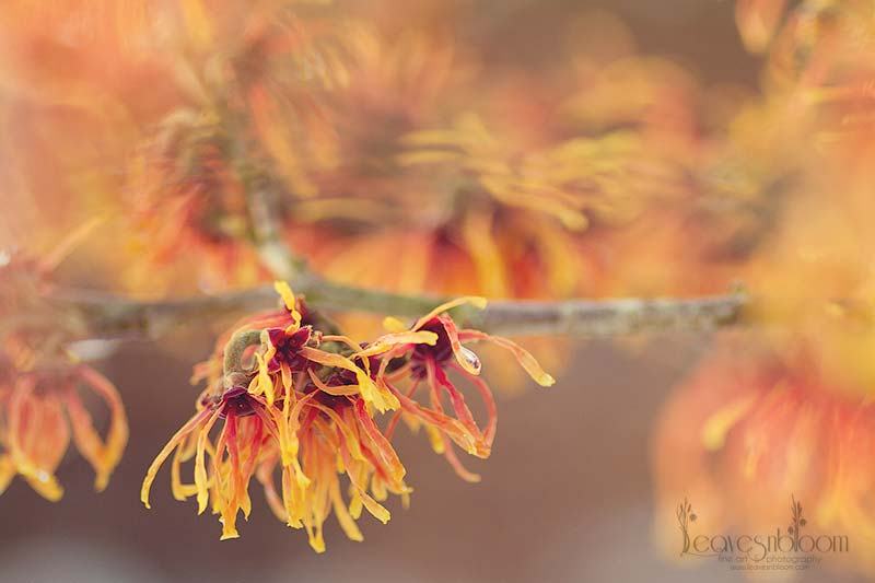 Photo Credit: Leaves N Bloom Fine Art & Photography