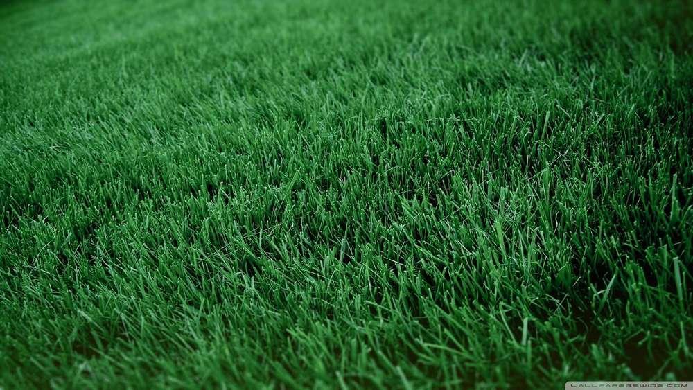 fresh-cut-grass-wallpaper-1080p-HD-.jpg