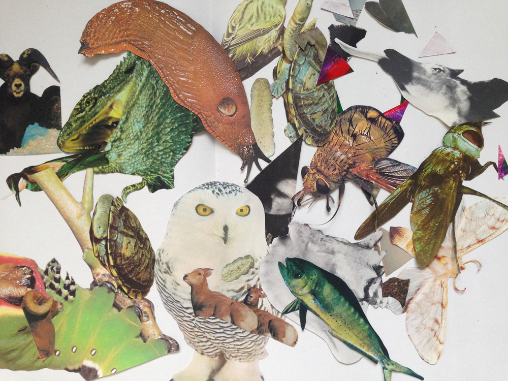 AnimalCollage4.jpg
