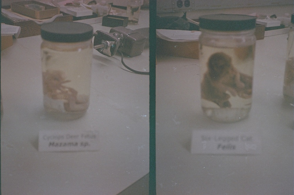 Left: cyclops deer fetus. Right: six-legged kitten. Taken at the Field Museum, October 2013. Canon Demi (half-frame) camera with expired film - excuse the dark exposure.