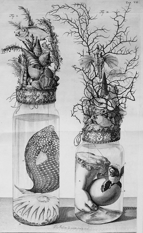 Illustration of several Ruysch specimens from the  Public Domain Review .