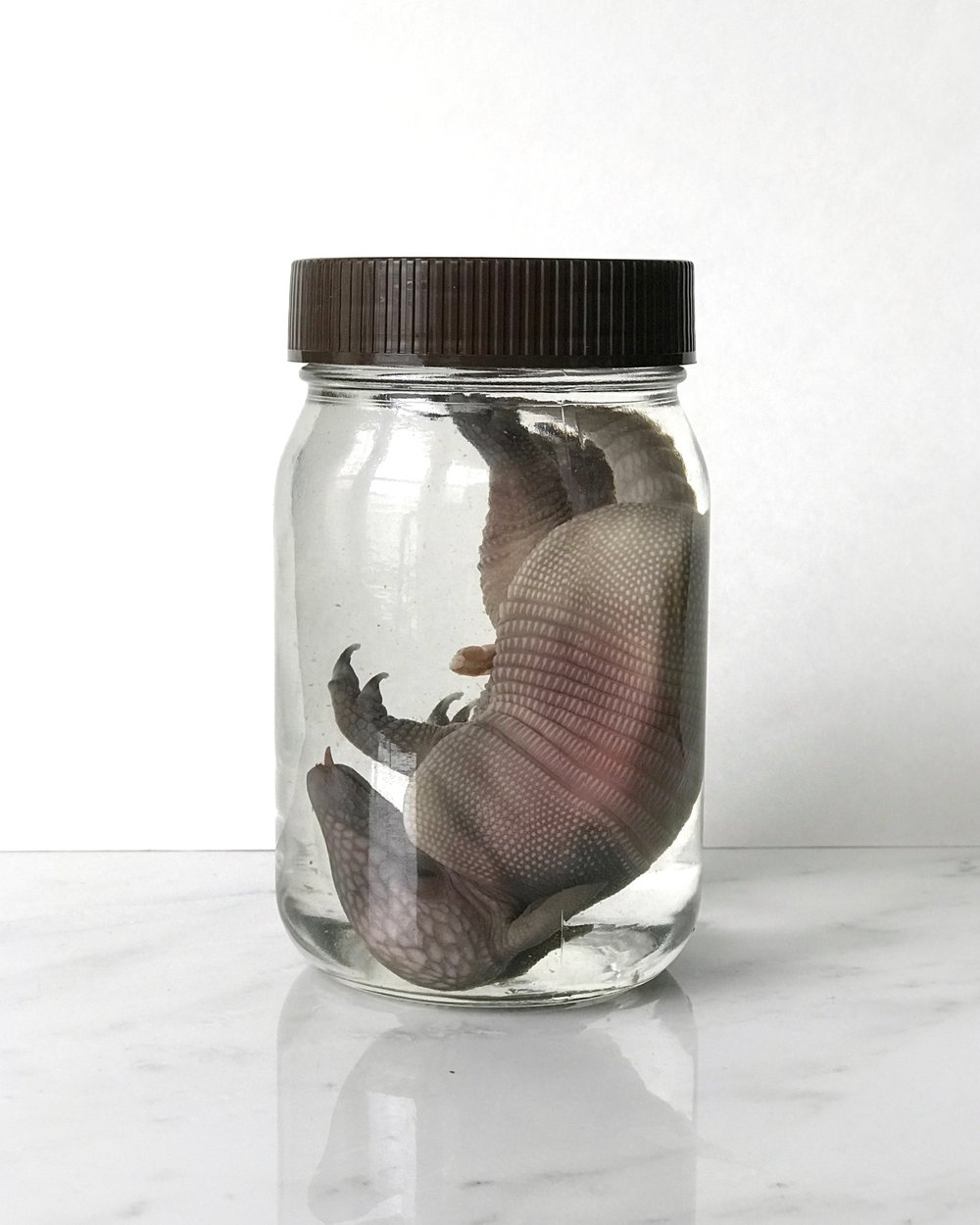 After following all of the steps, your specimen should look great in a clean jar with fresh alcohol.