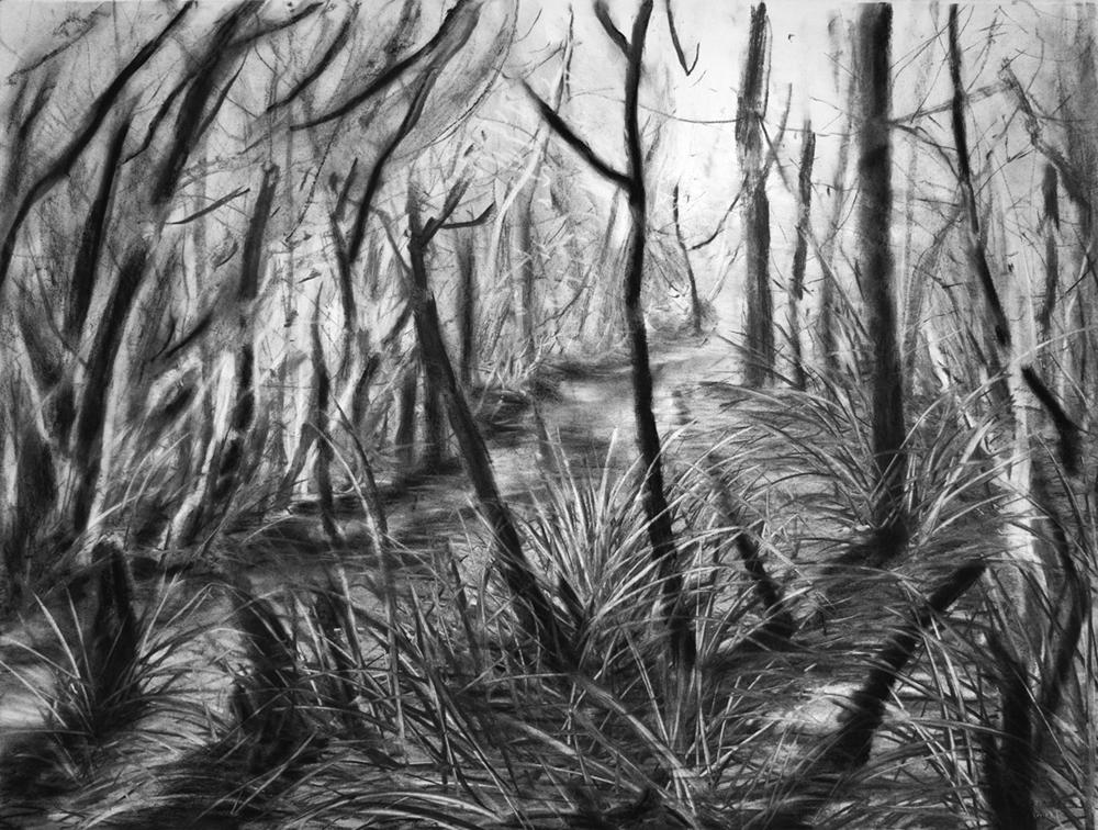 Swamp 06 small.jpg