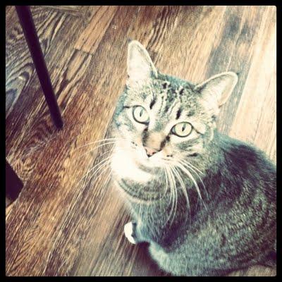 kittybegging.JPG
