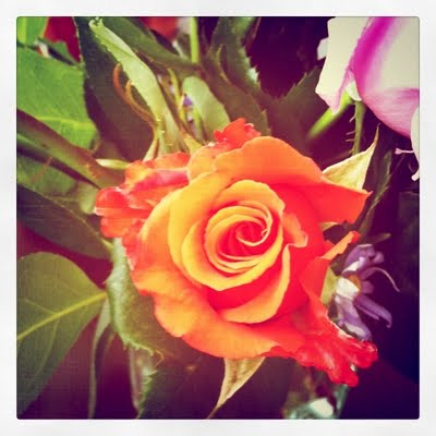 orange+rose.JPG