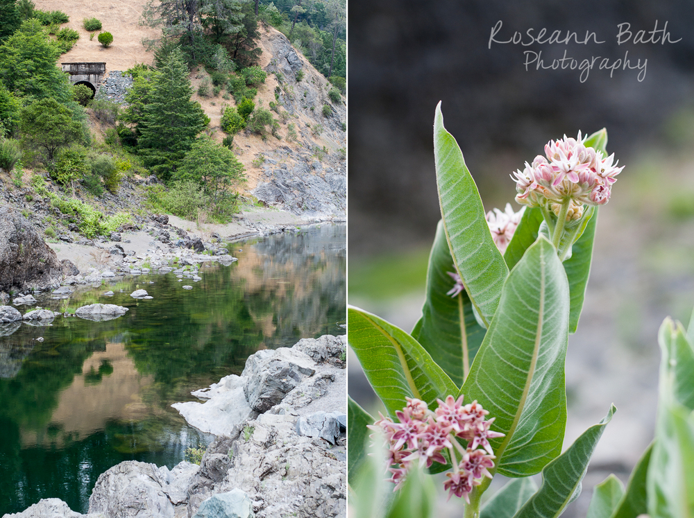 eel_river_wildflowers