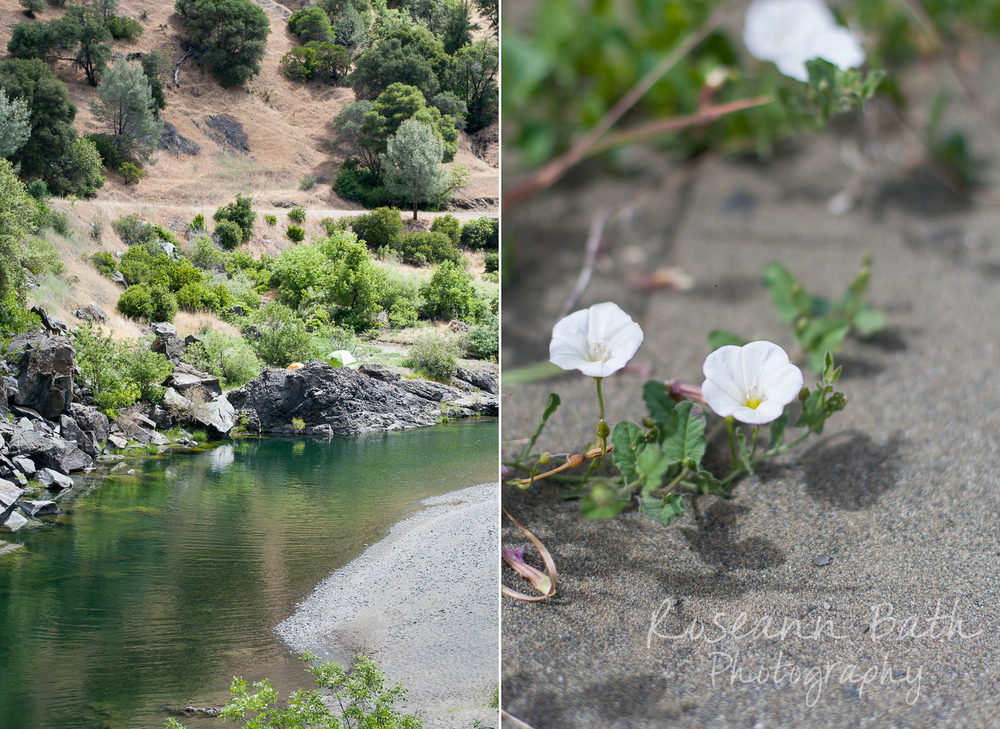 eel river wildflowers