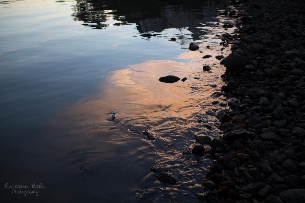 Tiburon | Roseann Bath Photography