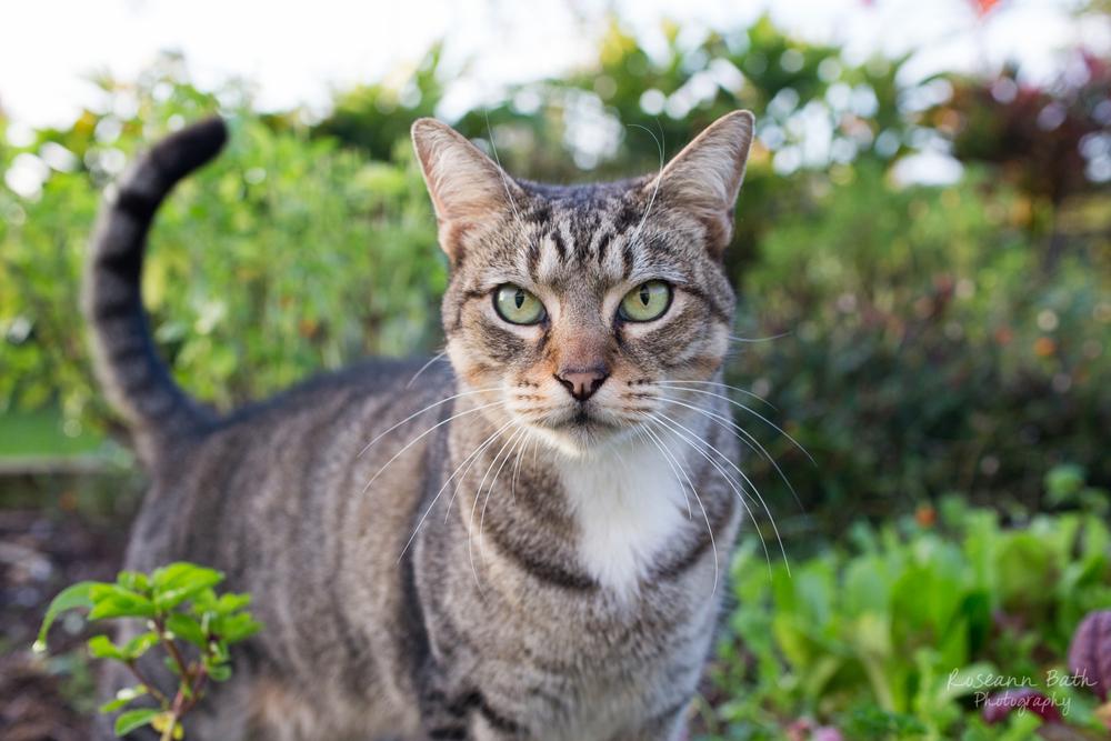 mochi kitty