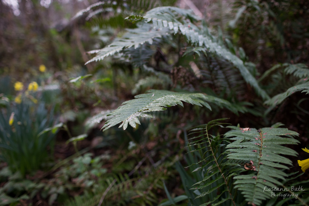 ferns in the rain