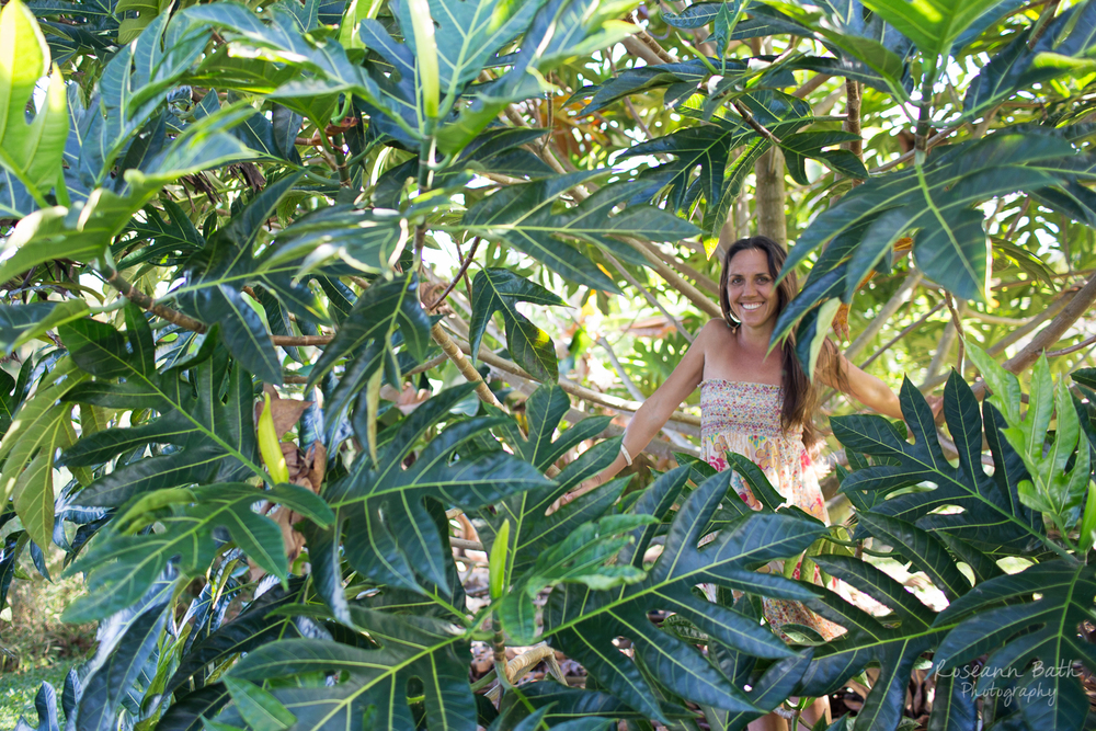 inside the breadfruit tree