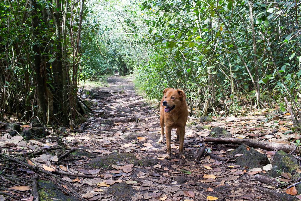 Nala in the jungle