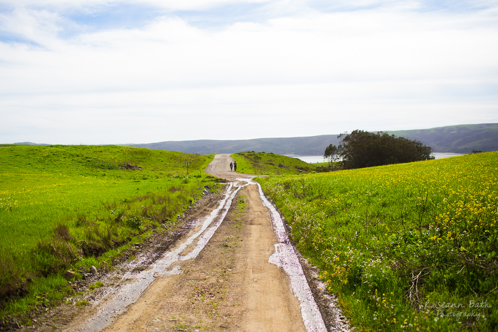 Clark Road, Tomales Bay