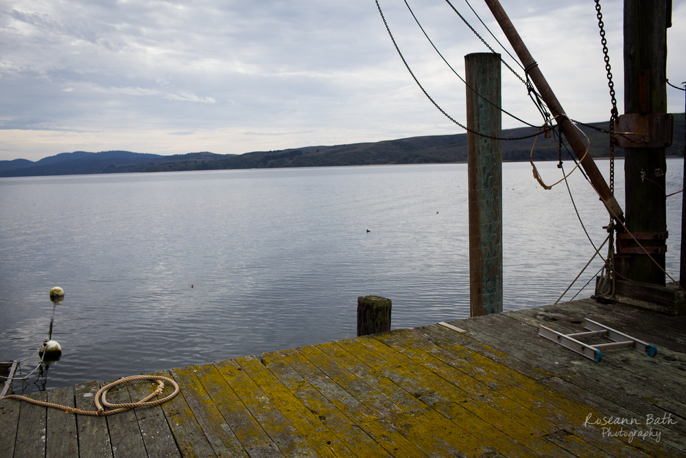 view from Ed's dock, Tomales Bay