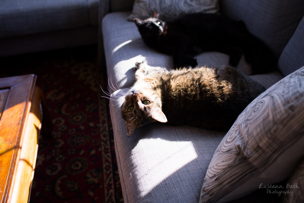kitties napping in the sun