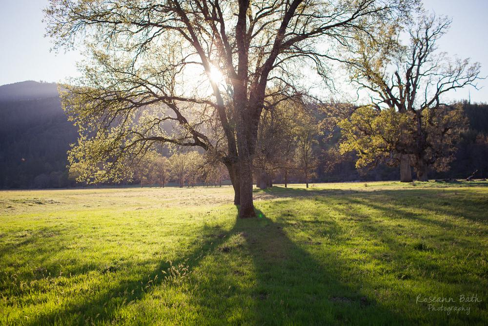 valley oak setting sun
