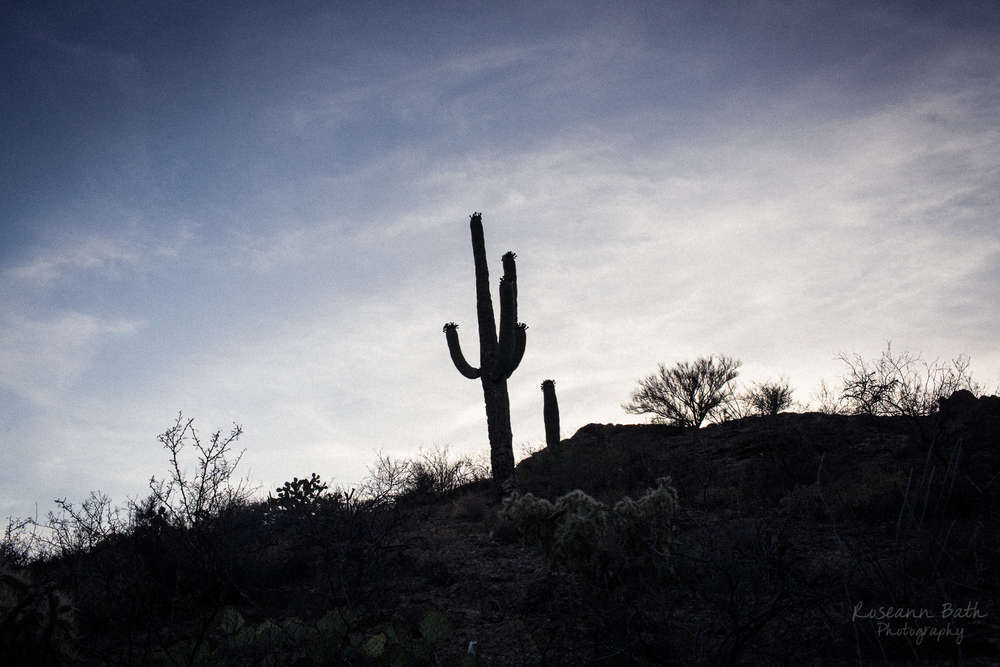 saguaro silhouette at sunset