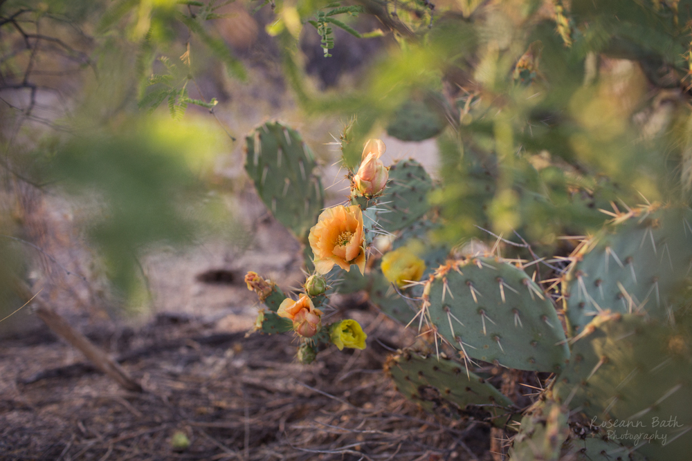 prickly pear blossom orange yellow