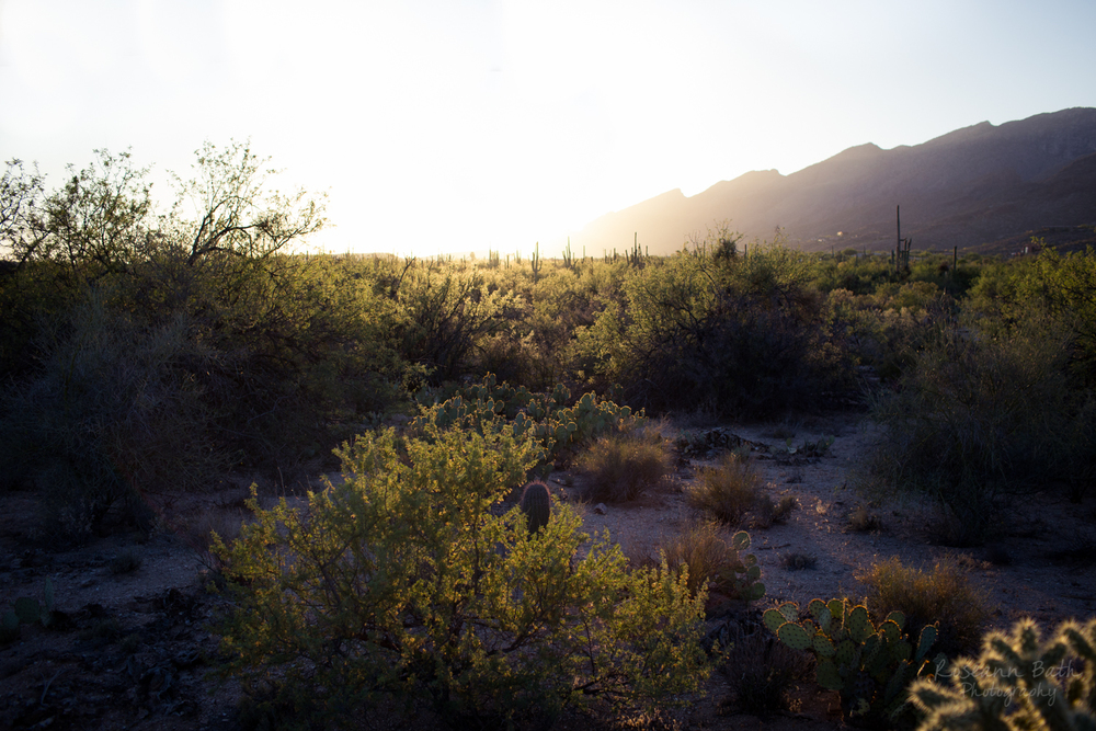 Sabino Canyon at Sunset
