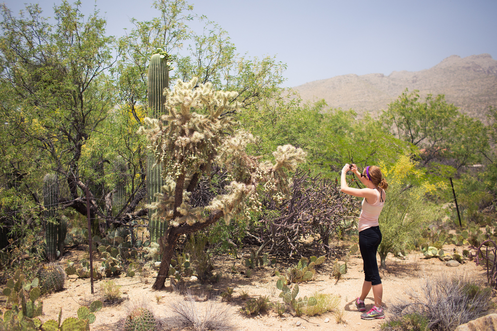 photographing a saguaro