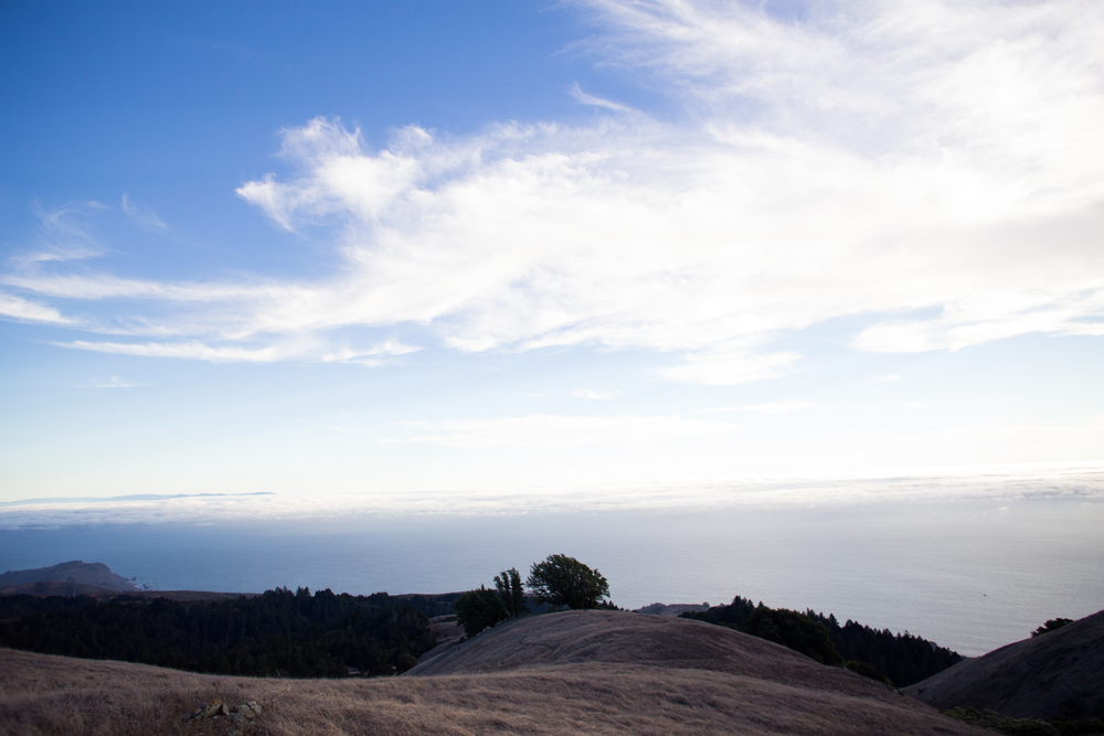 mount tamalpais view