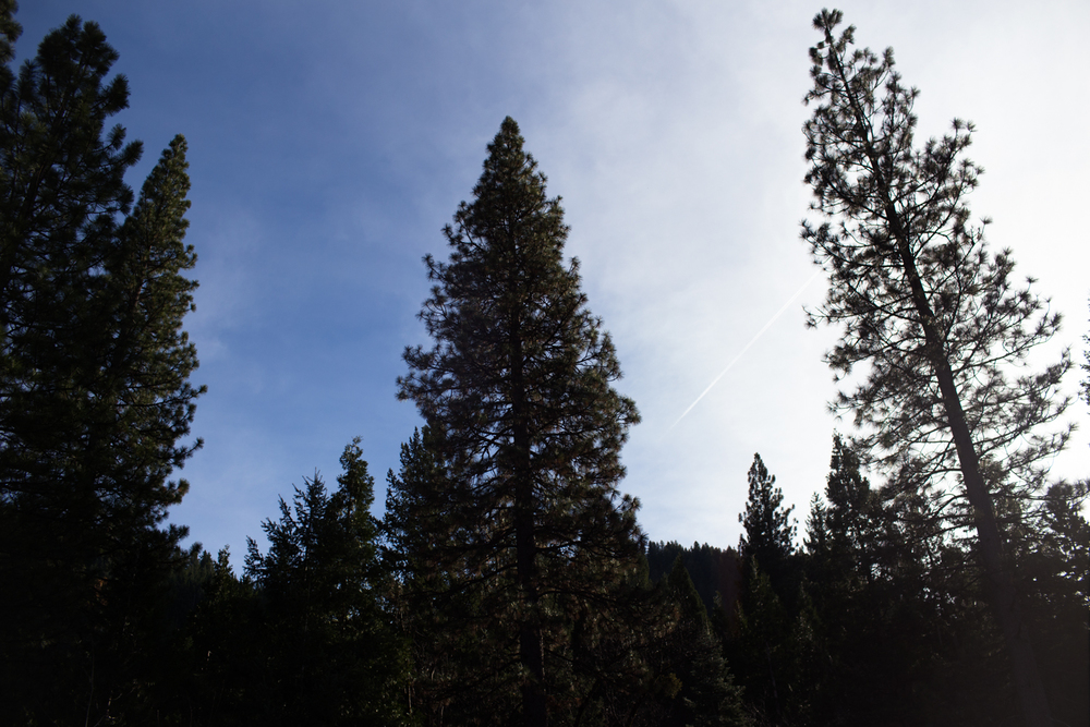blue sky in the sierras