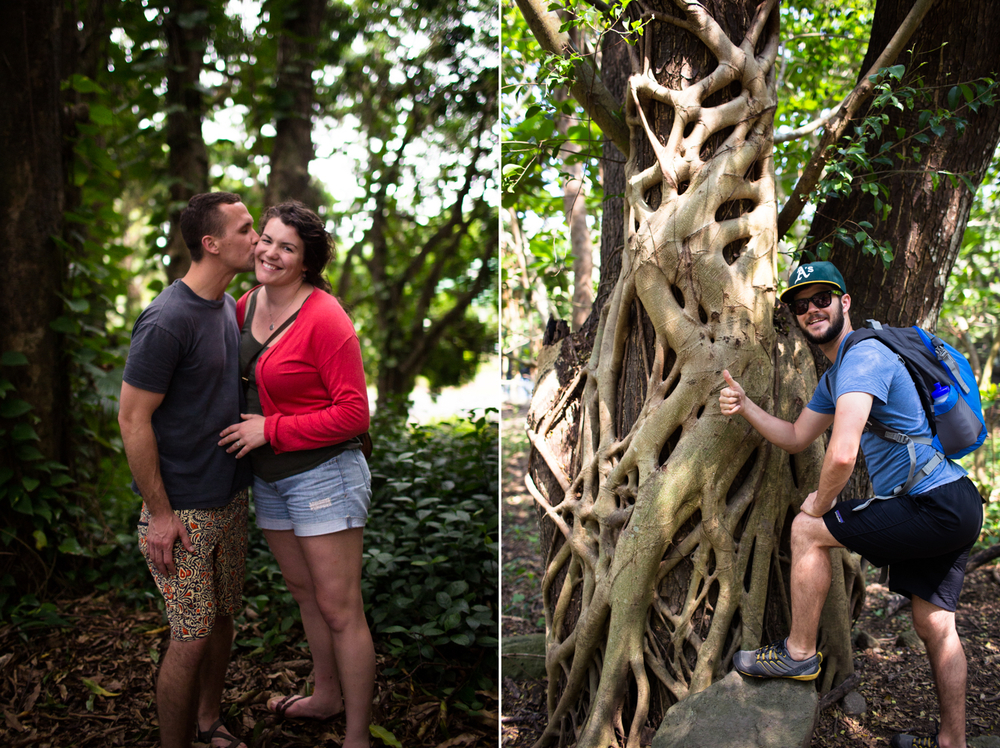banyan treee